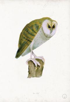 Barn Owl - artist signed print